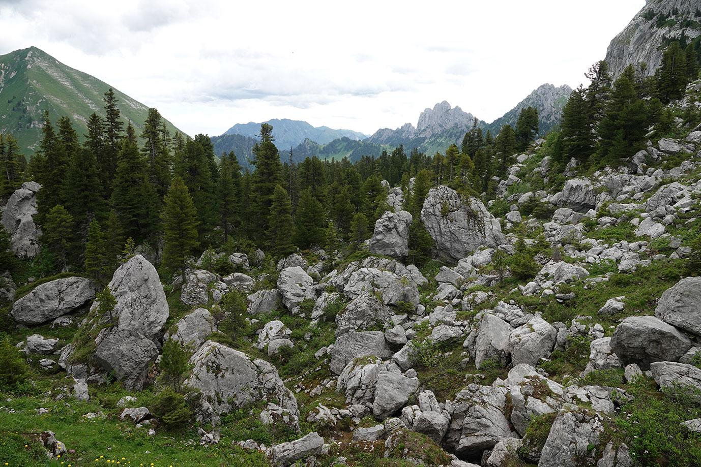 Forêt du Lapé