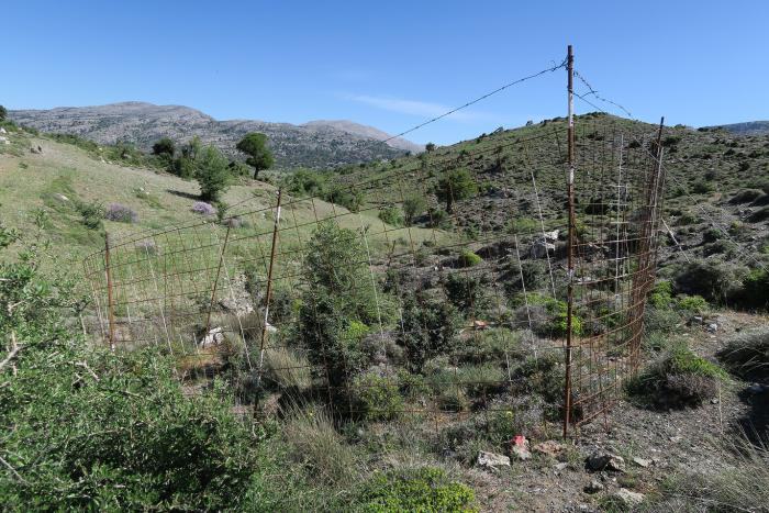 One of the recently fenced plots in eastern Crete.