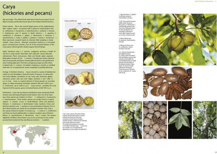 Pages showing the genus Carya