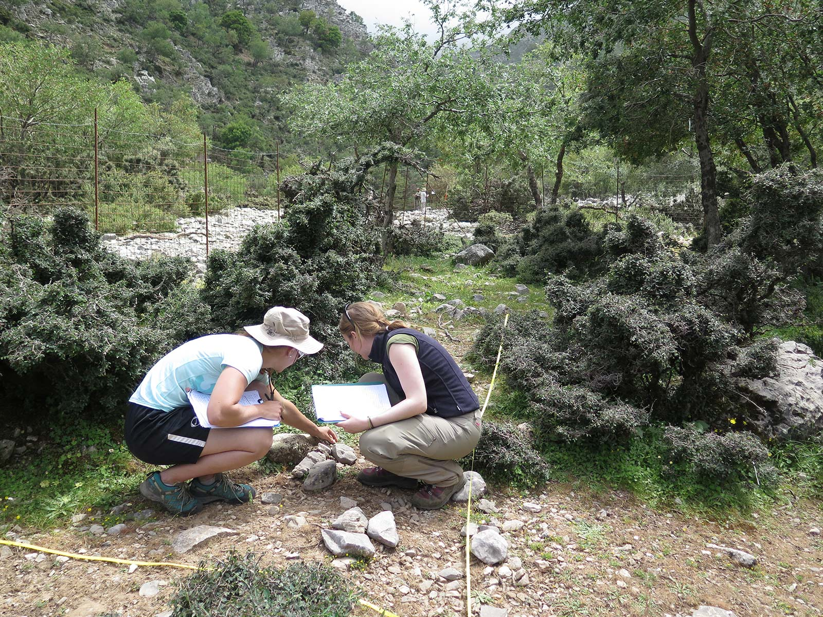 Collaborators of the Zelkova Project determining plants within the fenced plots