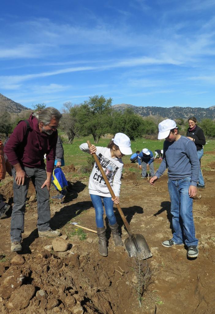 Pupils planting their tree