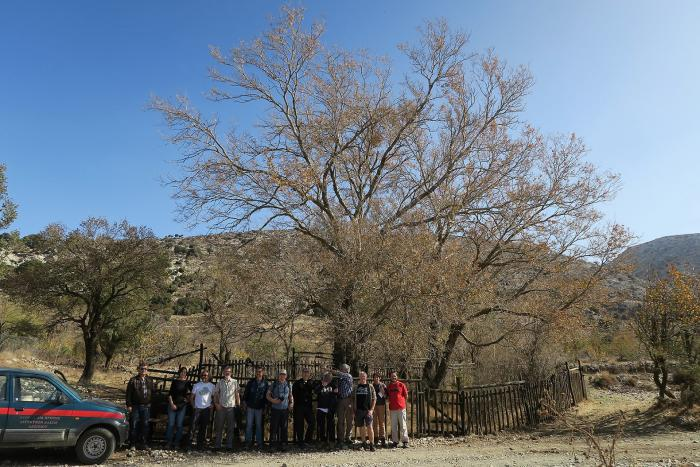 Part of the Zelkova abelicea conservation team in front of a big Zelkova abelicea tree in eastern Crete.