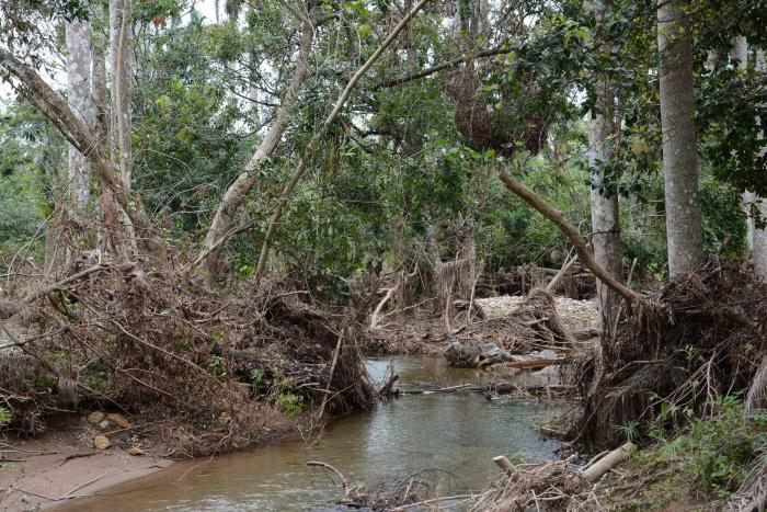 Banao Ecological Reserve suffered heavy damages after the passage of Hurricane Irma. Sancti Spíritus, Cuba.