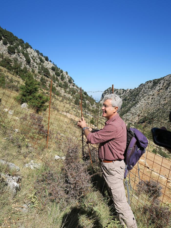 Sicilian expert Giuseppe Garfì examining the shoot elongation in a fenced plot during the annual project meeting.