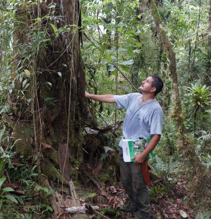 Leonel Coto (CATIE) in front of Oreomunnea mexicana