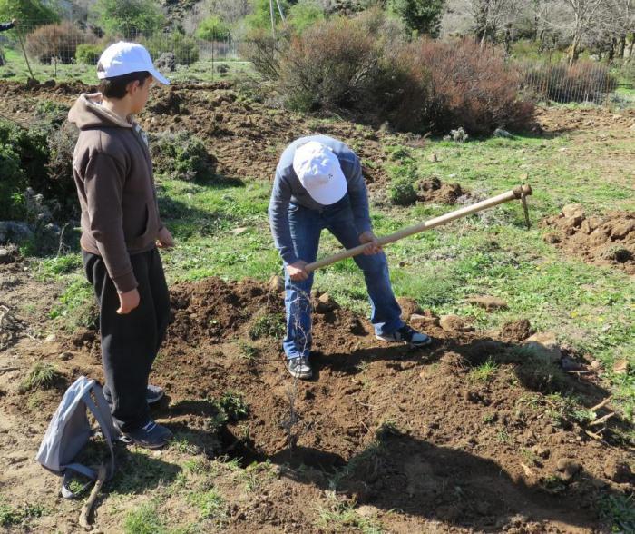 Pupils planting their Zelkova tree